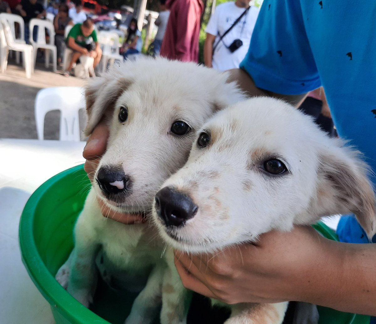 Starting the week off right with these cute faces  #MondayMorning #dogsoftwitter<br>http://pic.twitter.com/pLG4jQM05V