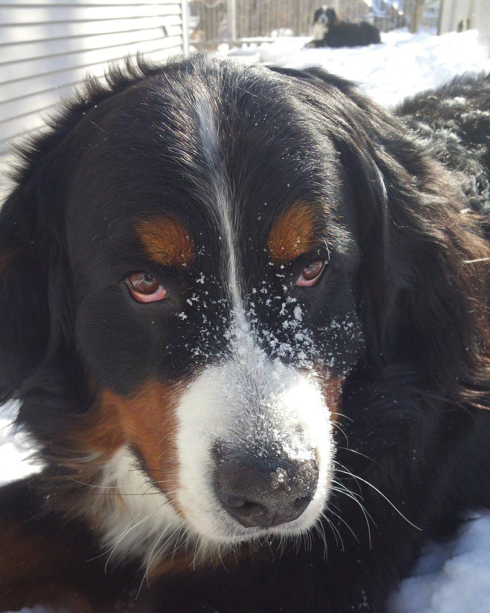 Happy 3rd birthday Dinah! Goodbye young dog, hello GOOD dog!  #MondayMorning #mondaythoughts<br>http://pic.twitter.com/Ybzsm7JZZA