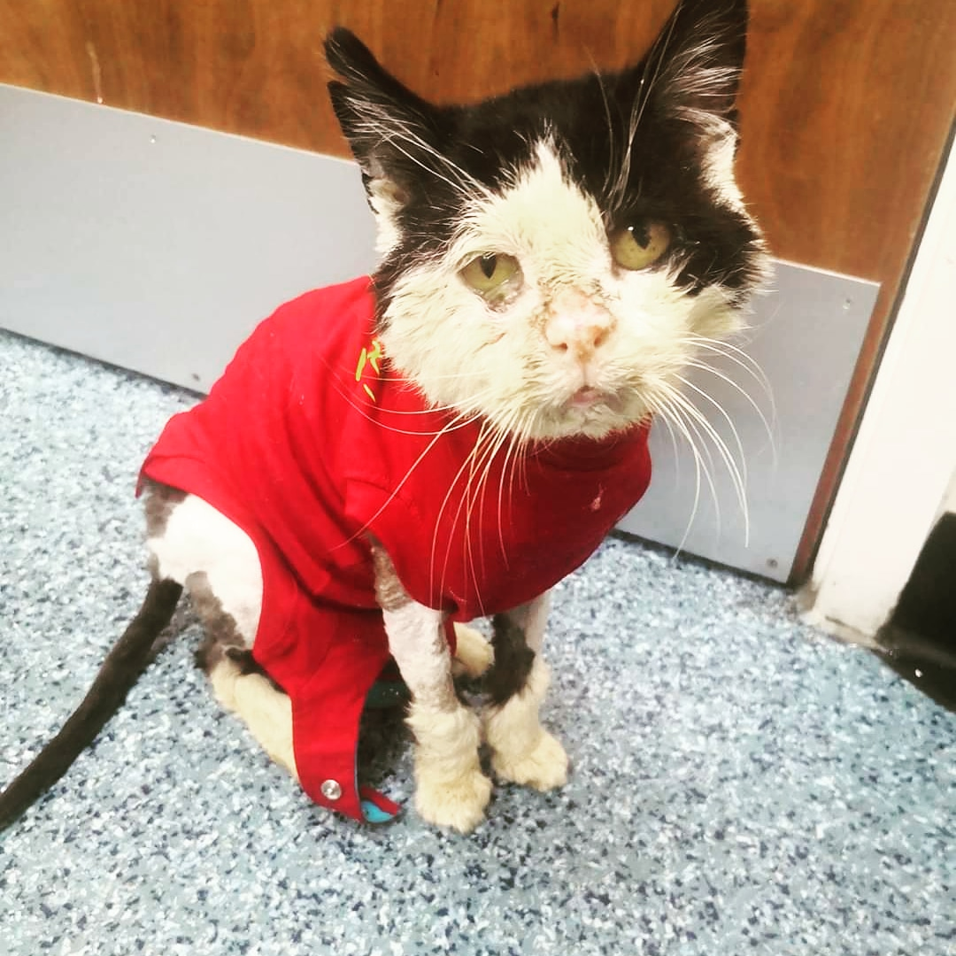 I perk up when Im at the vets. I love stimulation and being involved. Ive had laurabolin, b12 and a few other bits and pieces. ❤️ Please keep everything crossed for me 🐾 #cats #CatsOfTwitter #mondaythoughts #rescue #fingerscrossed