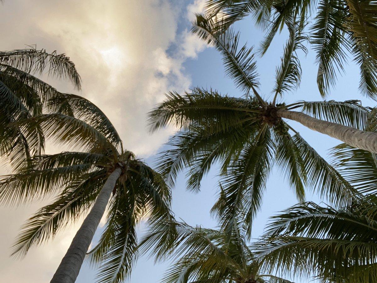 Nothing like sunshine and palm trees to start your day. 🌴🌴🌴 @kron4news #Jamaica #sunrise #SagitariusSeason