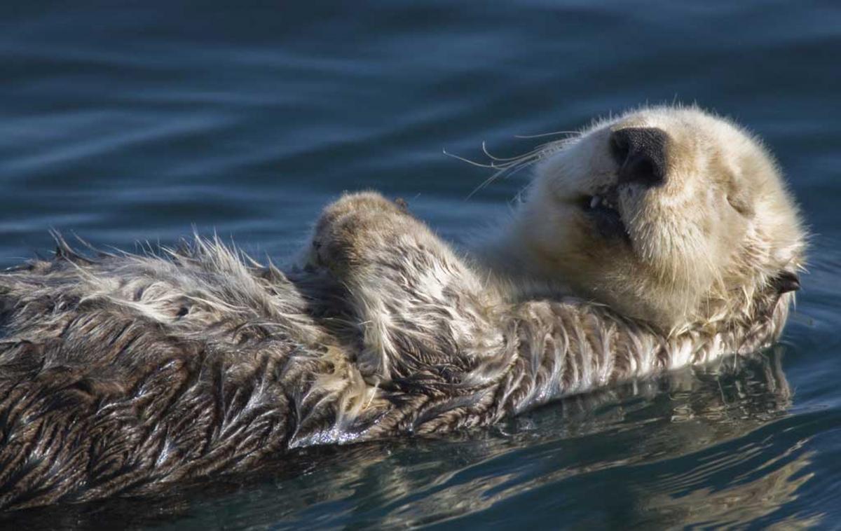 @oceana's photo on #mondaymood