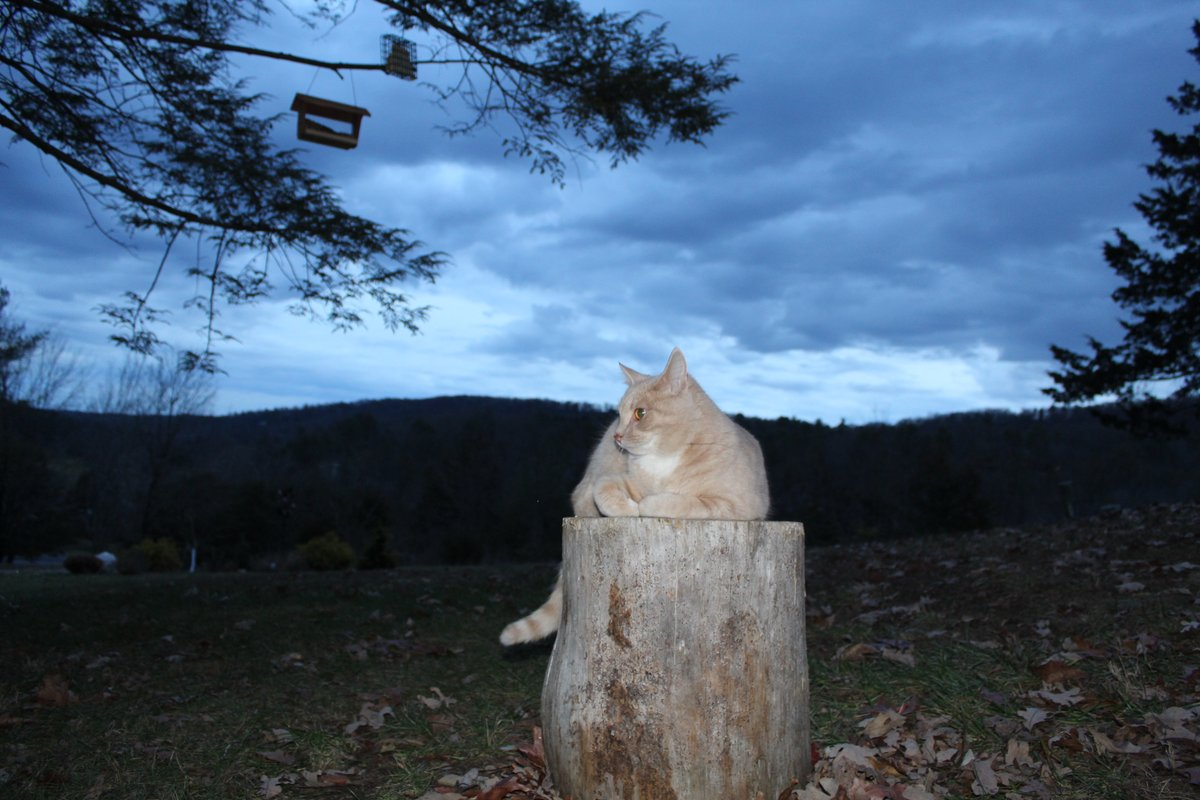 @MelissaNordWx tell @hbwx, Tony, a #cats #CatsOfTwitter #weathercat reports 37F & rain at #sunrise in Basye, Va. Grey #clouds blanketed the #sky #MondayMorning @ThePhotoHour. #GetUpDC come to the #mountains & #forestbathe with #Nature & #weather bring @MiriWeather. #photooftheday