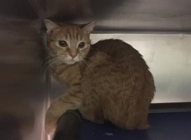 SYDNEY is a bit frightened in the shelter. She may needs some time to relax and come around on her own terms. Sydney is at BACC waiting to meet a new friend.  https://www. facebook.com/NYCDEATHROWCAT S/photos/a.2095041903840964/2949535638391582/?type=3&theater  … <br>http://pic.twitter.com/oQTffu8LTG