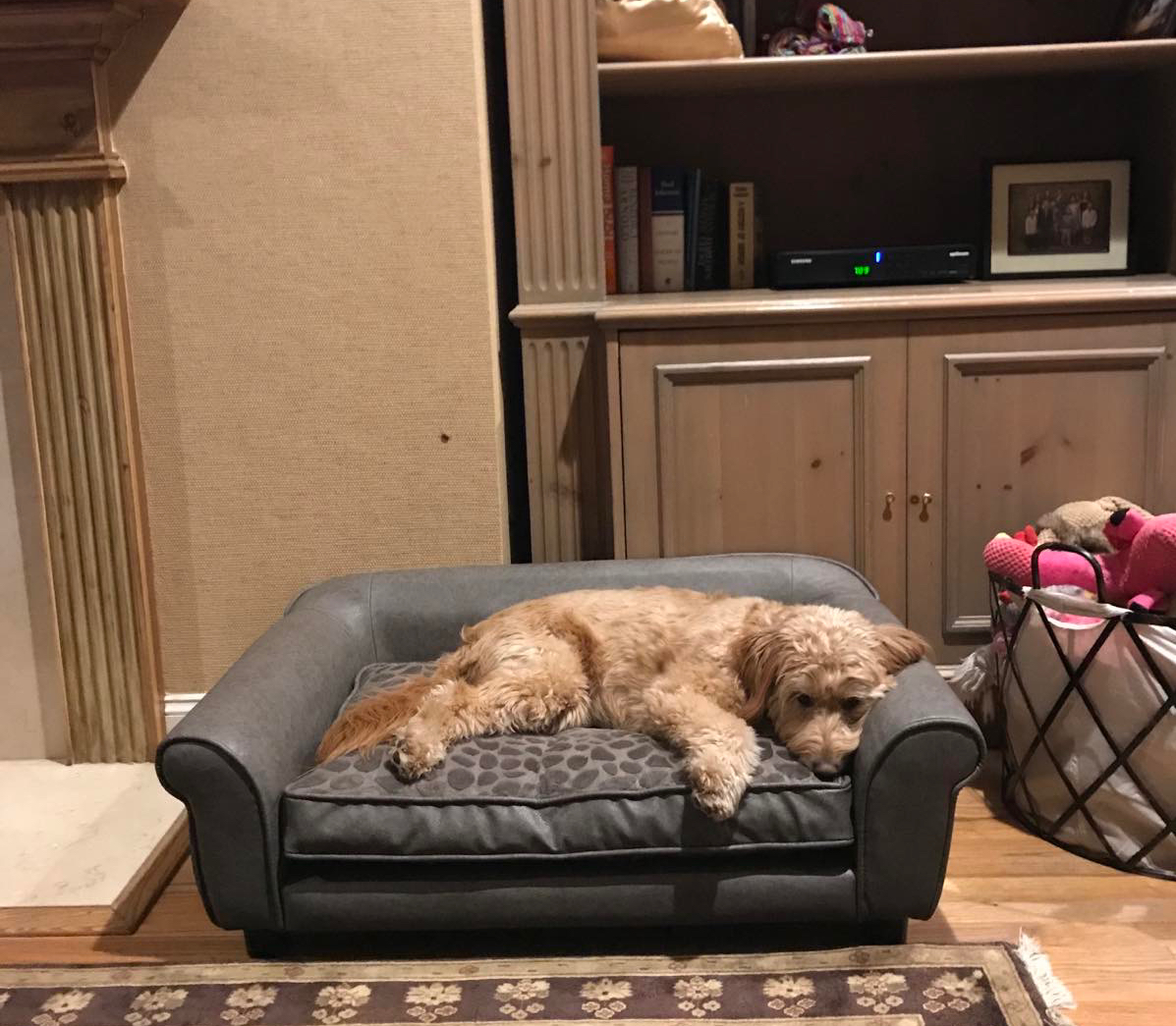 Happy Monday! 2 hour delay for Sadie! #thedisabilityguysdogs  #bernedoodle #goldendoodle https://t.co/EBxLSFCE8c