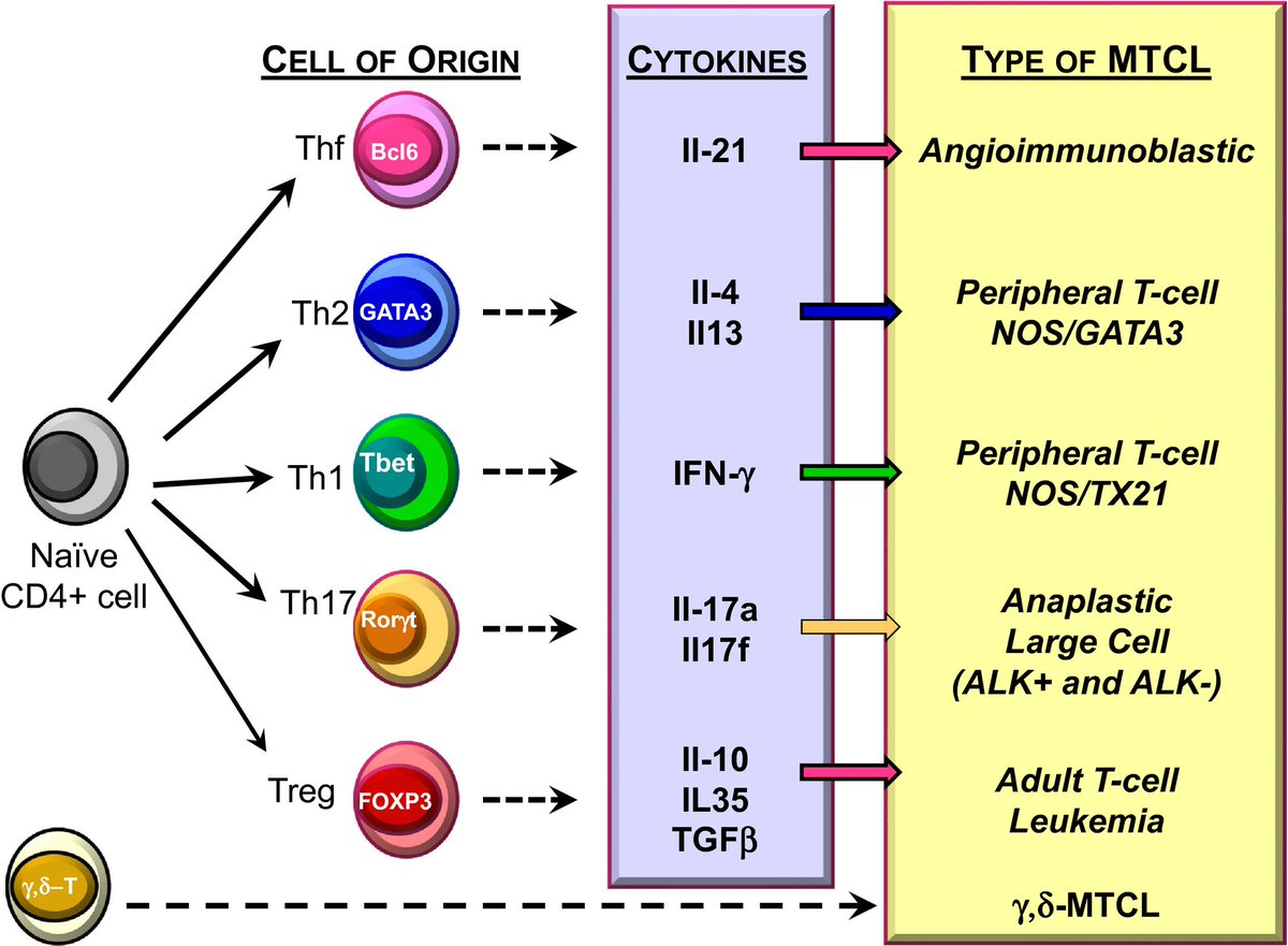 Immunity Mediated By B Cells And Antibodies