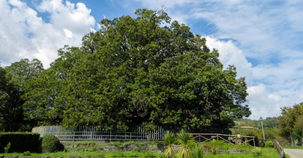 Il castagno dei 100 cavalli è il celebre albero dalle enormi dimensioni, situato ai pendici dell'Etna. #blogsicilia