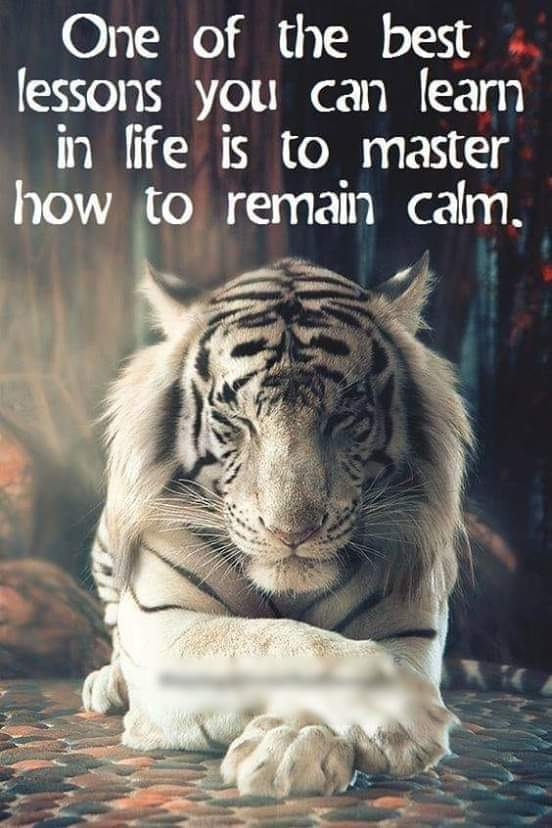 I love the quote but I love the picture of #SiberianTiger looking majestic. If the tiger can master #calm there is #hope for us all #lifelessons