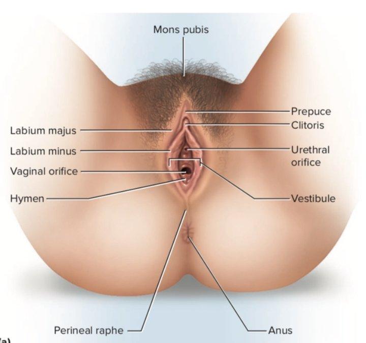 Pea sized lump in vagina