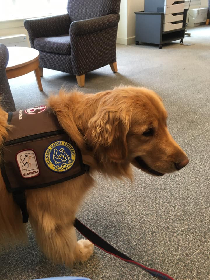 Remy is in Dimond Library, Level 2 until 11:00 this morning looking for free hugs.🤗 Visit him or other study buddies today until 8pm. #UNHfff #studybuddies #finalsweek #petpartners #elderpet @UNHStudents @UNHHealth