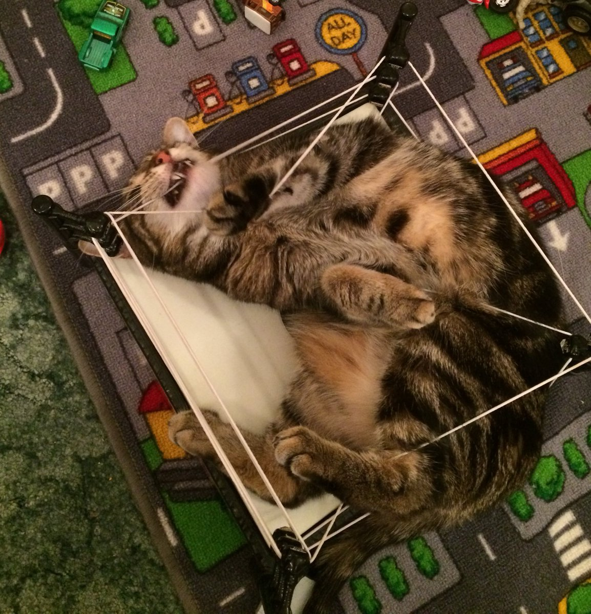 Guess who's not allowed to play in their human brothers wrestling ring anymore?  #cats #CatsOnTwitter #TabbyTroop<br>http://pic.twitter.com/rCYcffKzsM