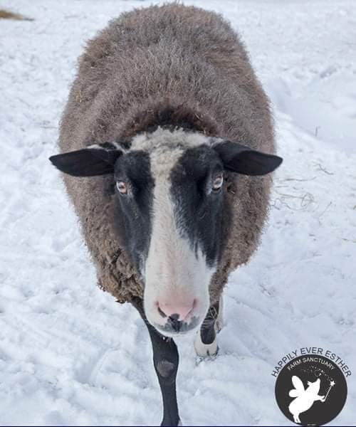"""Just voted, """"Best in Snow""""! - Moose <br>http://pic.twitter.com/J7cjlZ8h94"""