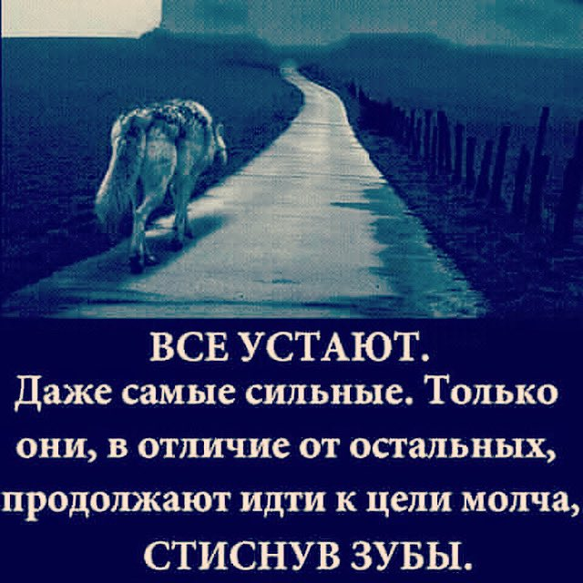 oleynikufc photo