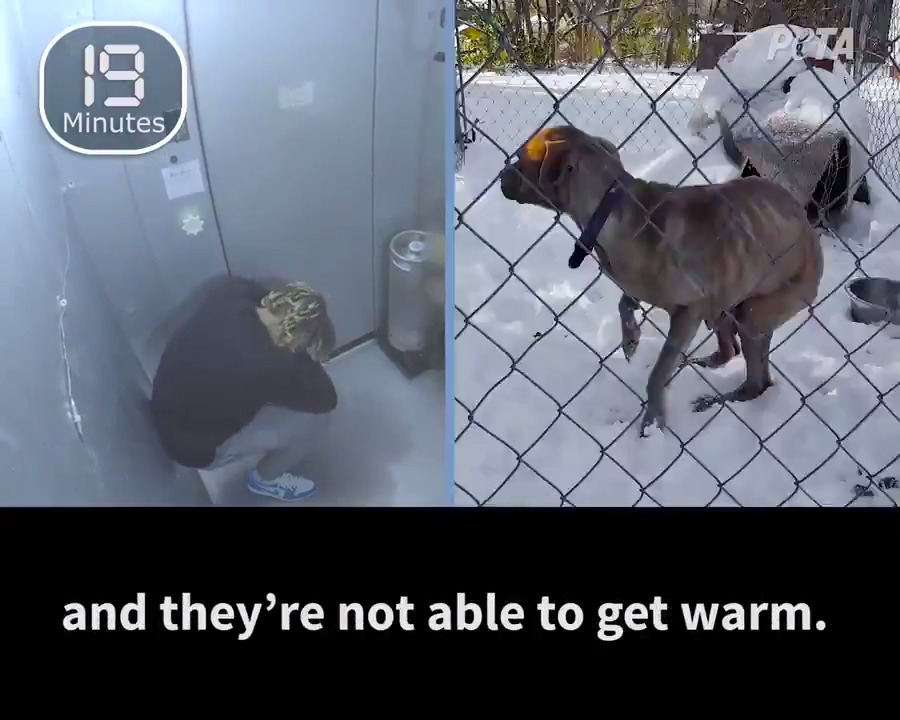 Chiefs' Tyrann Mathieu raises awareness about animal neglect in winter