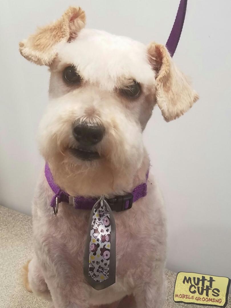 #petmobile #petgroomer #doglover #bayareadogs #grooming | http://www.muttcutsmobilegrooming.compic.twitter.com/jHBHX0ol3i