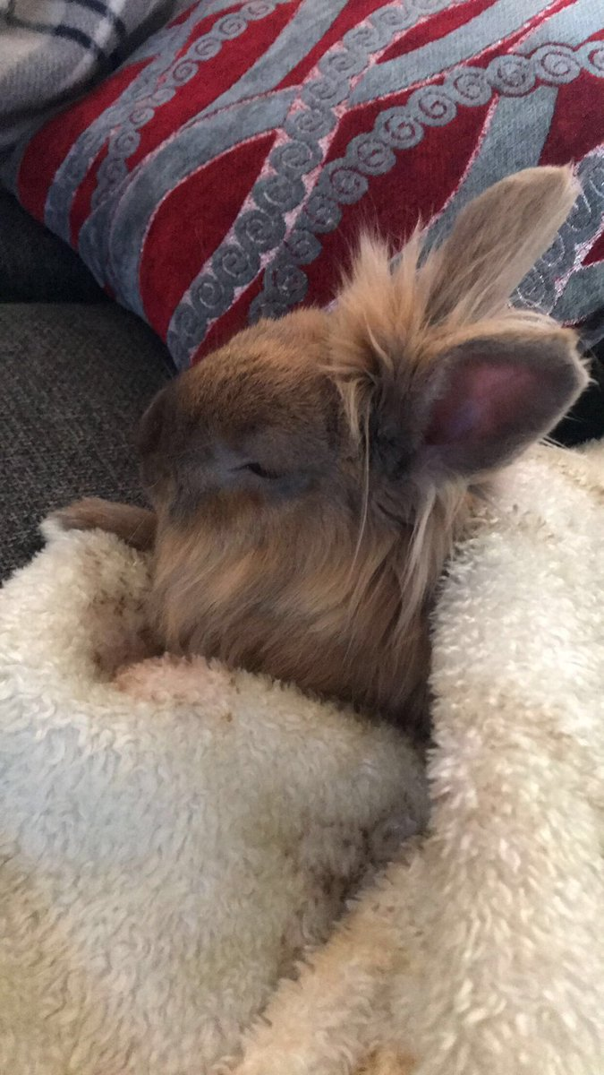 Sleepy Alvin 💤#cute #cuteboy #rabbit