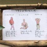 いいよ!キレてるよ!長崎バイオパーク。フラミンゴの見分け方イラストがキレッキレ