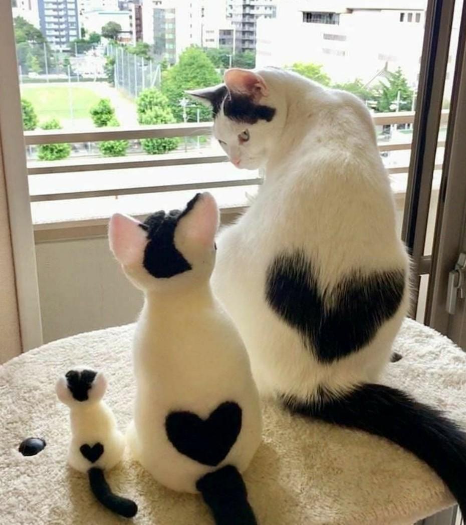 Hello?  #CatsOfTwitter <br>http://pic.twitter.com/00oryfnXv9