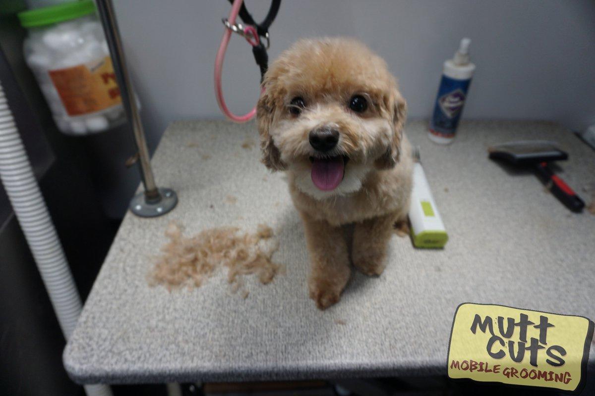 #petmobile #petgroomer #doglover #bayareadogs #grooming | http://www.muttcutsmobilegrooming.compic.twitter.com/Spr6nU2jLB