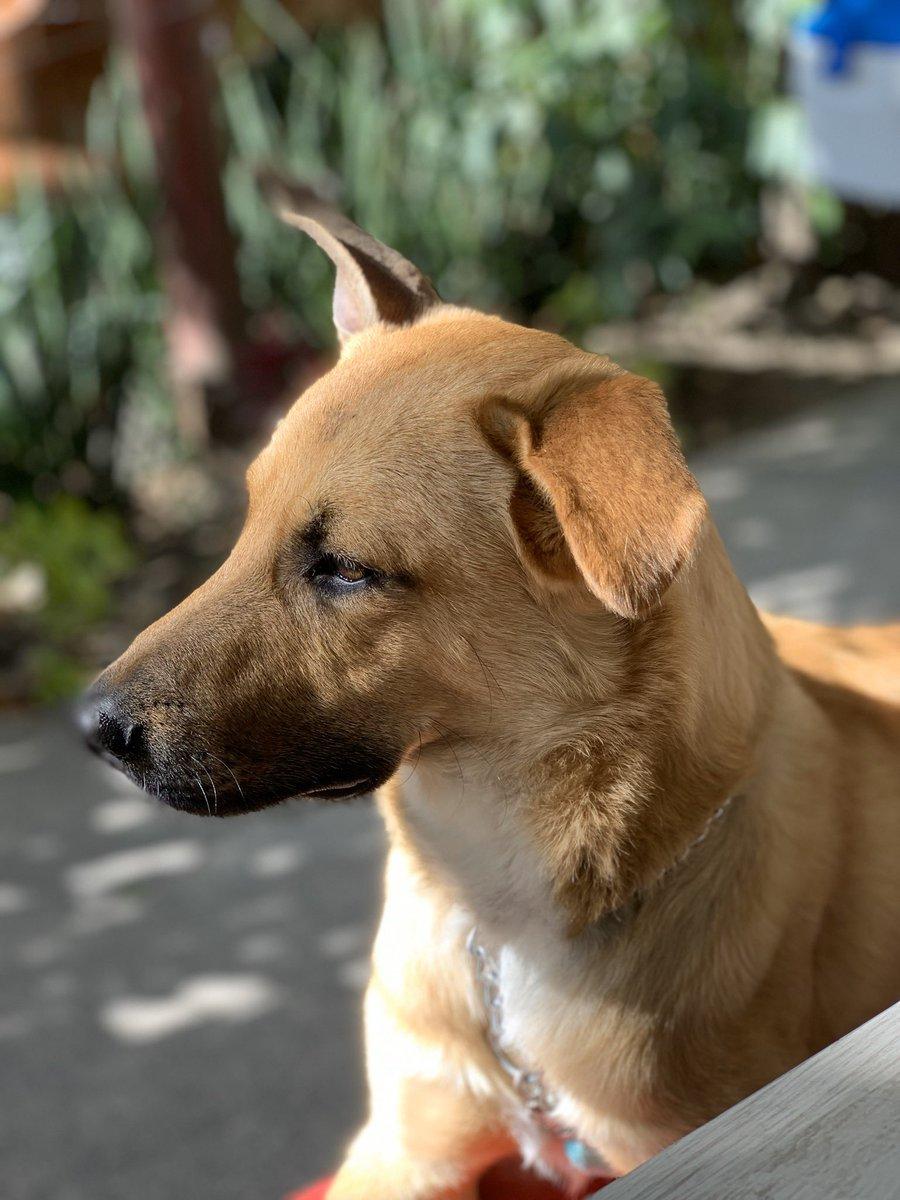 Se perdió mi perrito hace unos minutos en La Condesa-Ciudad de México, se llama Rimji y está asustado porque lo acaban de atropellar. Si lo vez agradezco me contactes, lo rescatamos en febrero, es mestizo y es de tamaño mediano. Por favor RT para difundir. Gracias!