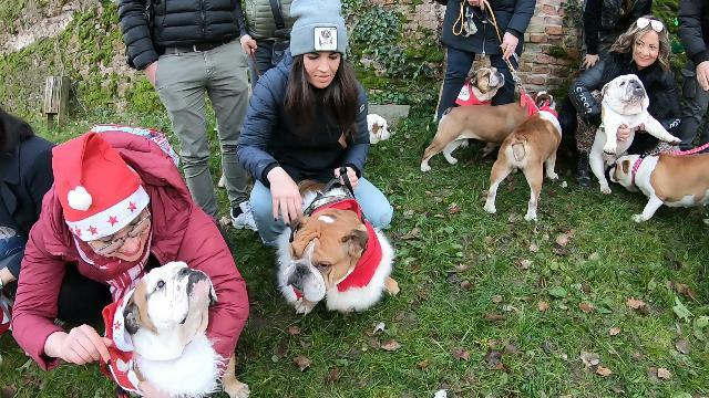 A Padova è Natale anche per i bulldog https://t.c...