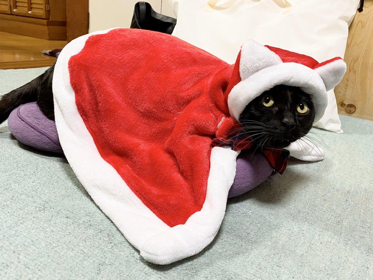 このクリスマスコスチューム、今までで一番かわいいかも知れん…とおののいているのだが裾がちょっと長くてろんさん的には歩きにくそうだ…裾直しせねば…ムムム