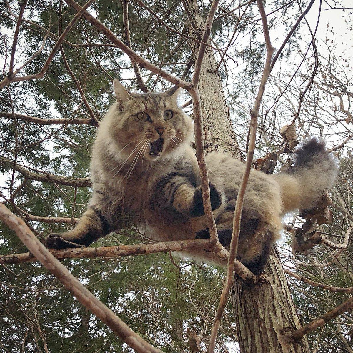 ごきげん。(๑φДφ)木登りたのしーー!!