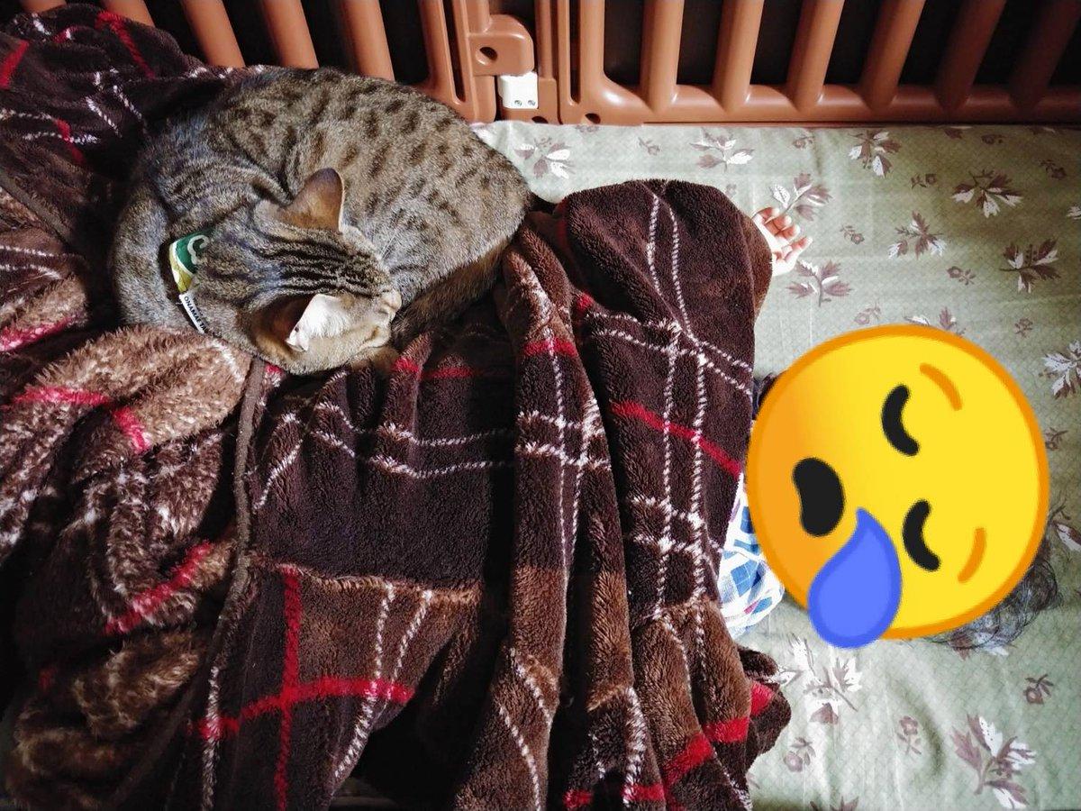 602日目。キジトラと乳児、ちょっと珍しい組み合わせ。乳児を寝かし付けたら、いつの間にかキジトラが背後に控えていて、のっそり寄ってそのまま寝た。黒猫がそれを見ていたのでてっきり一緒に寝るのかと思いきや近くのクッションで横になって寝た。
