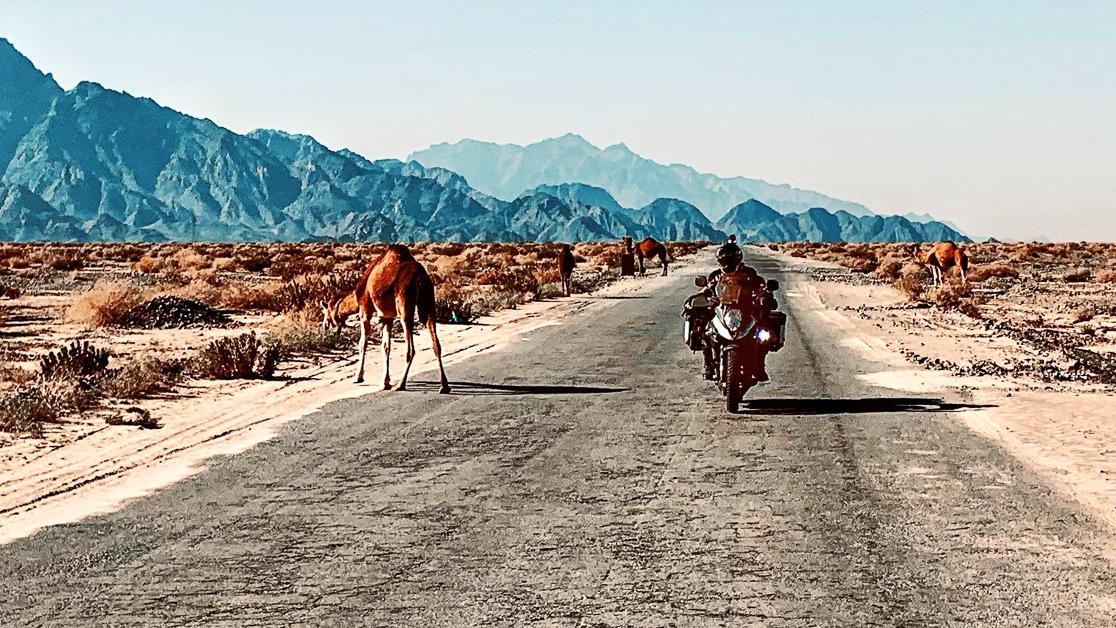 Animal crossing in Balochistan. ;-)  #Camel #Camels #Balochistan #Pakistan #Motorcycletrip #Motorcycle #VStrom #Desert #triparoundtheworld #traveling #overlander #travel #adventure #adventuretime