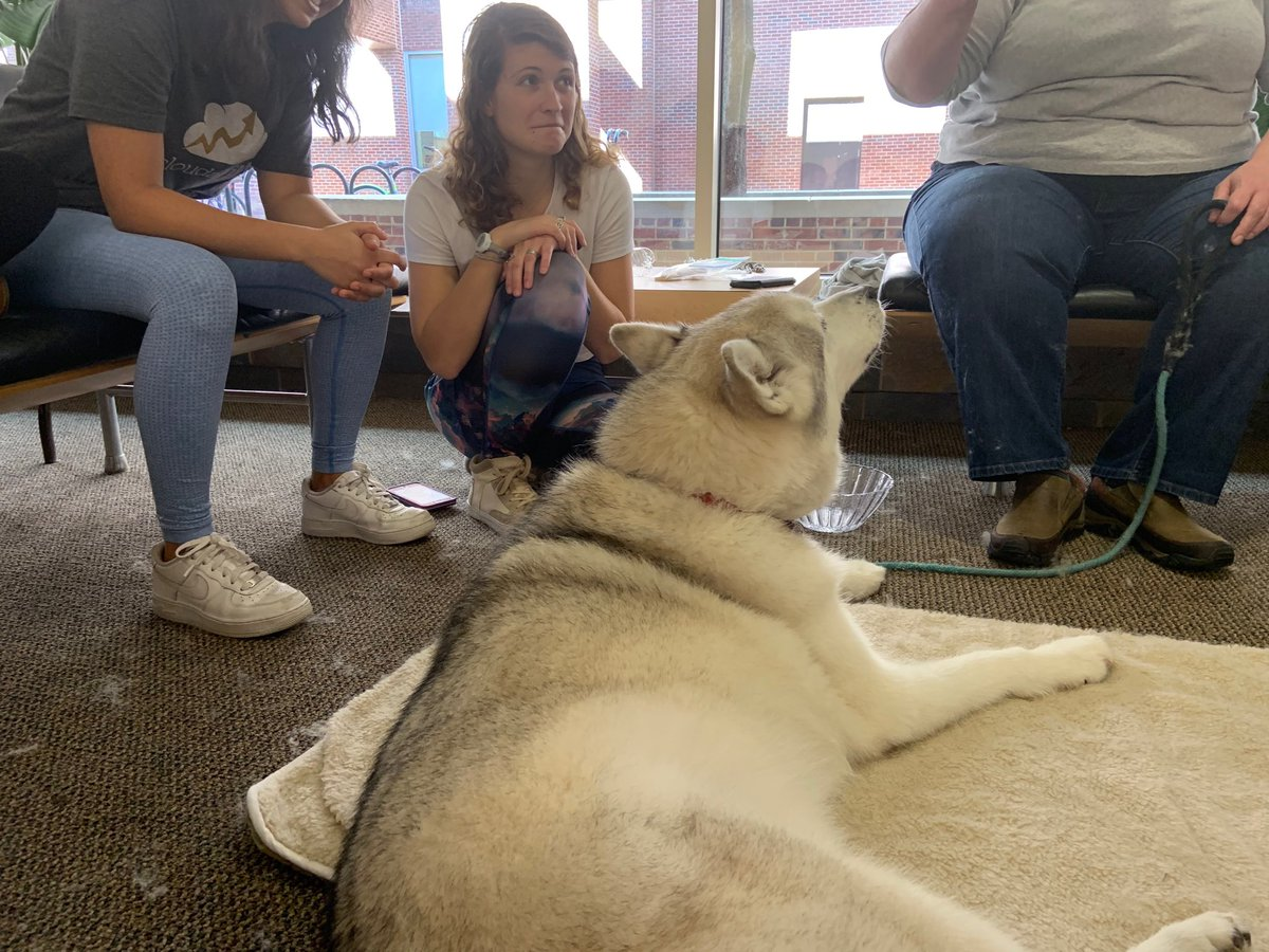 RT @CarolinaUnion: Pups are here in the Union to help you de-stress! Swing by the art gallery! https://t.co/eaBRSQKwOL