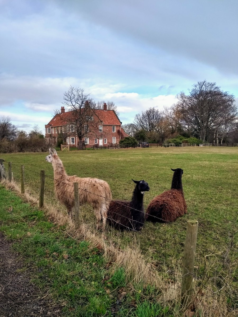 Thanks to @WhiteRoseDTP for facilitating a great writing retreat at @ChapelgarthEst. Location was amazing, food fabulous and a friendly bunch of fellow PhD writers providing peer support. And llamas.. 😃. Heartily recommend to anyone looking to get some writing done 🤓