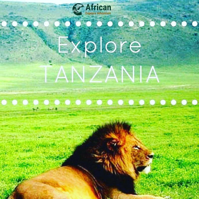 Book with us:🌍🦁🐯🦒✈️📩 . . . . . .   #africanexpresadventure #africa #colourful #safari #giraffes #africansafari #safarilovers #exploreafrica #travelafrica #adventuretime #africananimals #adventure #traveleastafrica