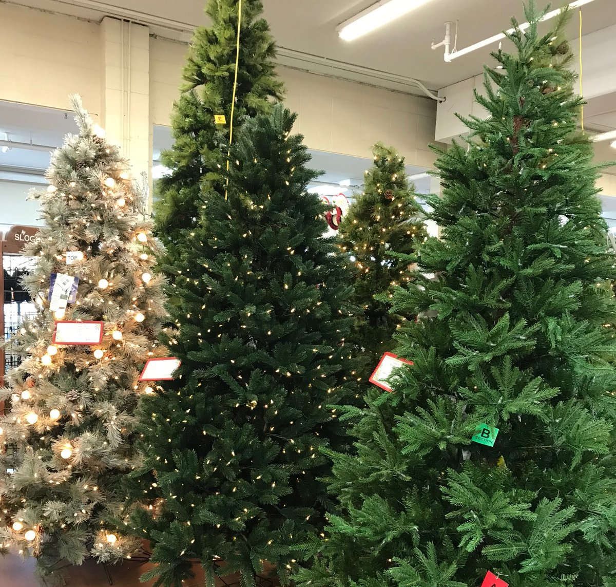 Gardenhelp Greengate Ca On Twitter Our Artificial Everlasting Trees Look Sooo Real They Are Flame Retardant Have Branches Hinged For Fold Away Storage Can Be Stored With Lights Attached Storage Box Included Want Pre Lit