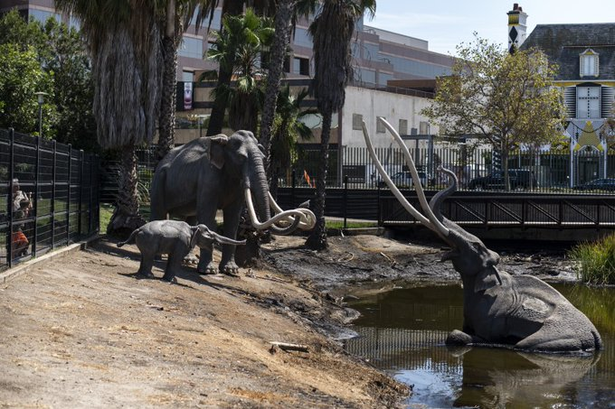 The iconic mammoth family of the La Brea Tar Pits and Museum.