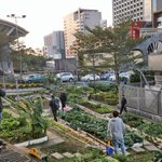 Image for the Tweet beginning: Small-scale #communitygardens on the most