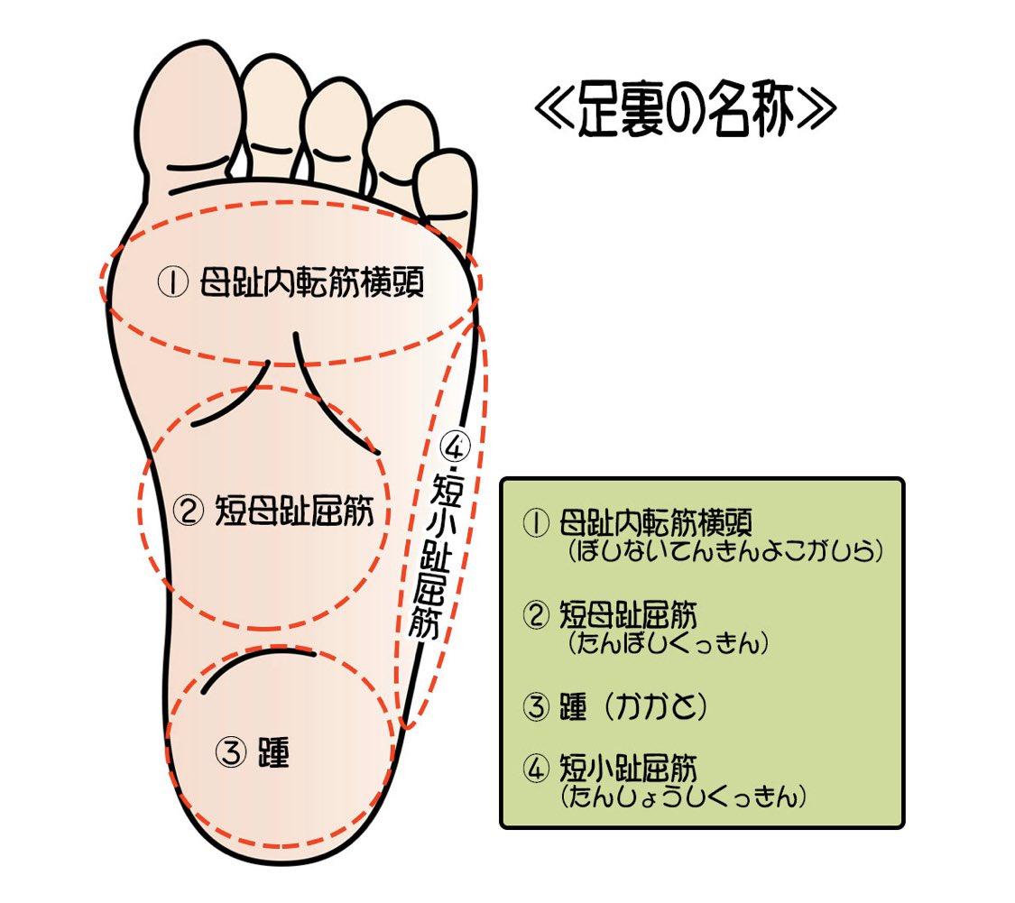 名称 足の裏