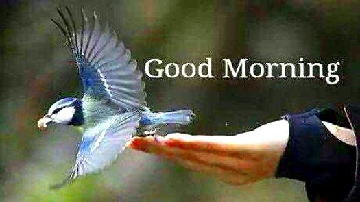 @saferprint @DrNikolova_Rumi @liss_uma @puhinnalle_ @CarinCamen @ElianaMirandaD3 @suziday123 @Julez_Norton @NewsSantPere @Strictly_Chris @YogaArmy @heatherrose1814 @BirgittaSunding @coughetycough @dunaisiaka @groot_molly @FlowsWine Good Morning! Happy Thursday and Have a Great Day safer and #friends:)
