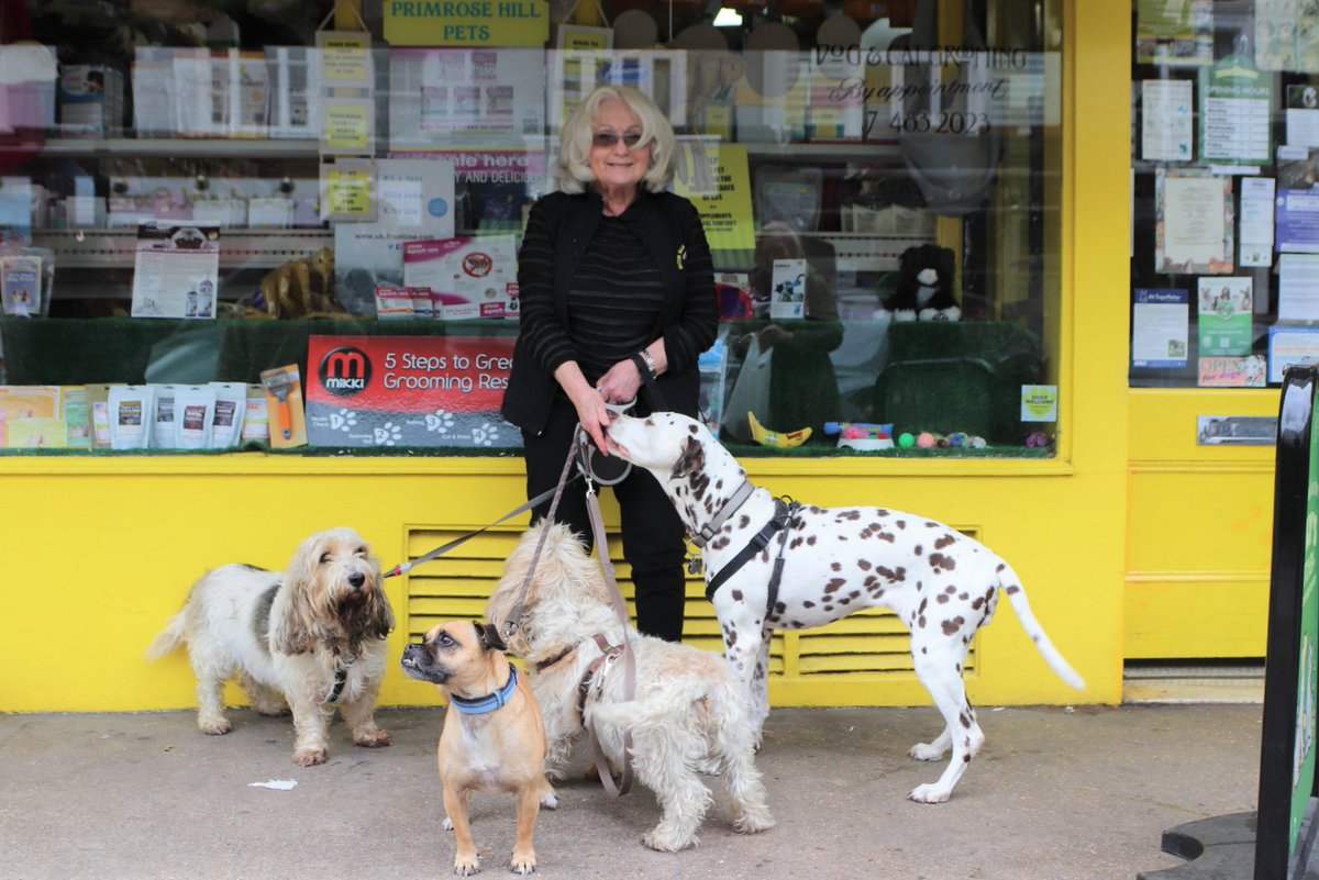 We interviewed Gail Levy from Primrose Hill Pets #shoplocal #petshop #primrosehill @primrosehillpet onthehill.info/2019/12/primro…