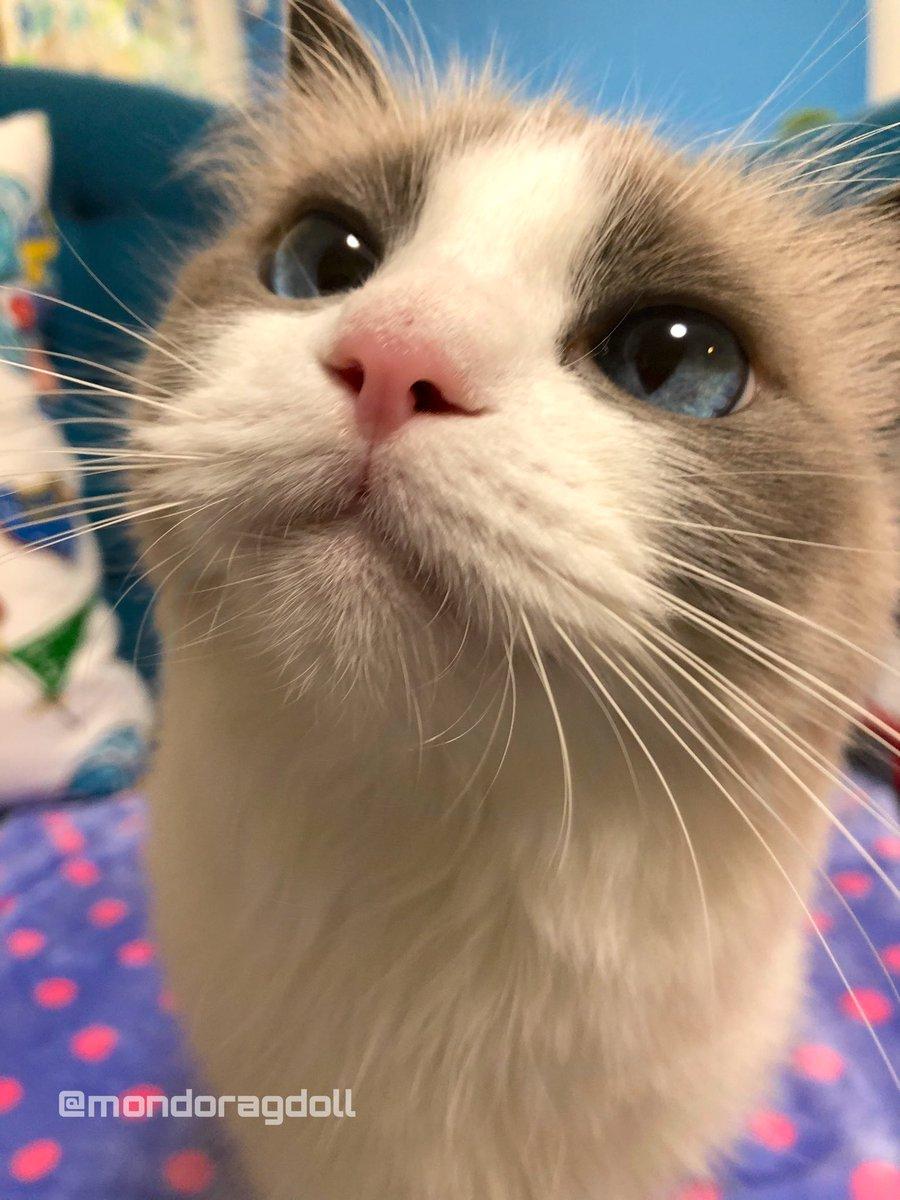 オバチャンな、今週の日曜日試験やのに全然勉強してへんねやで。テキストや問題集買うて受験料も払ってんのに全然やる気起きひんねやて。今日もとりあえず今から1時間だけ寝るらしいわ。てか1時間で起きると思う?まぁ無理やろな。(猫談)
