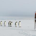 コウテイペンギンがカワイイ!人間の後について歩く姿に癒やされる!