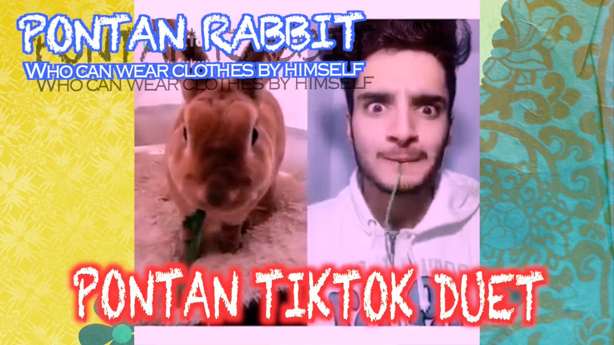 Pontan Rabbit TikTok DuetうさぎのぽんたんのTikTokデュエットMovie 動画はこちら→