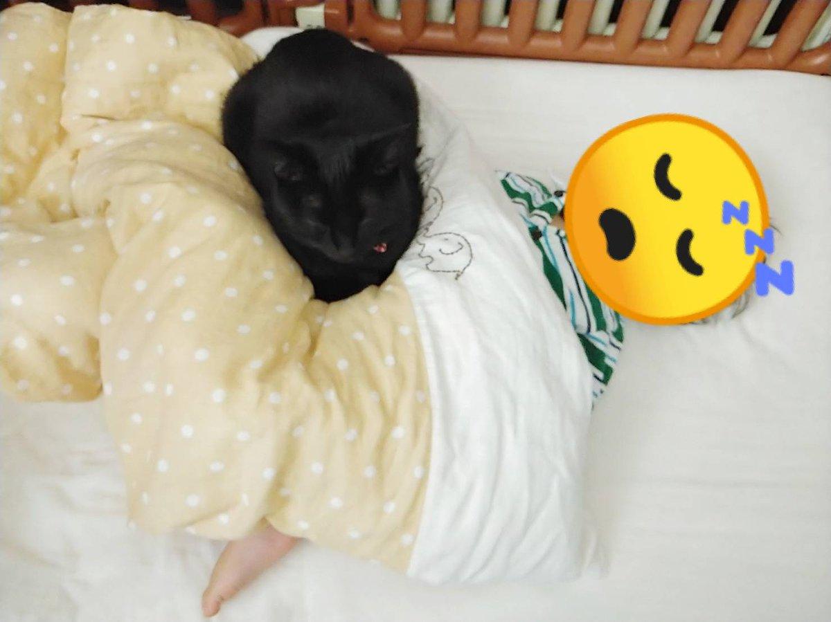 603日目。眠っている黒猫と乳児をふと見たとき、黒猫が乳児の腹に乗っているように見えた。苦しそうにはみえないが「さすがに腹は重いんじゃないの」と心配になって布団を捲ったら、器用に乳児は身体をねじって(?)いて特に問題はなかった。さすが添い寝のプロ、ちゃんとわかってやってるんすね。