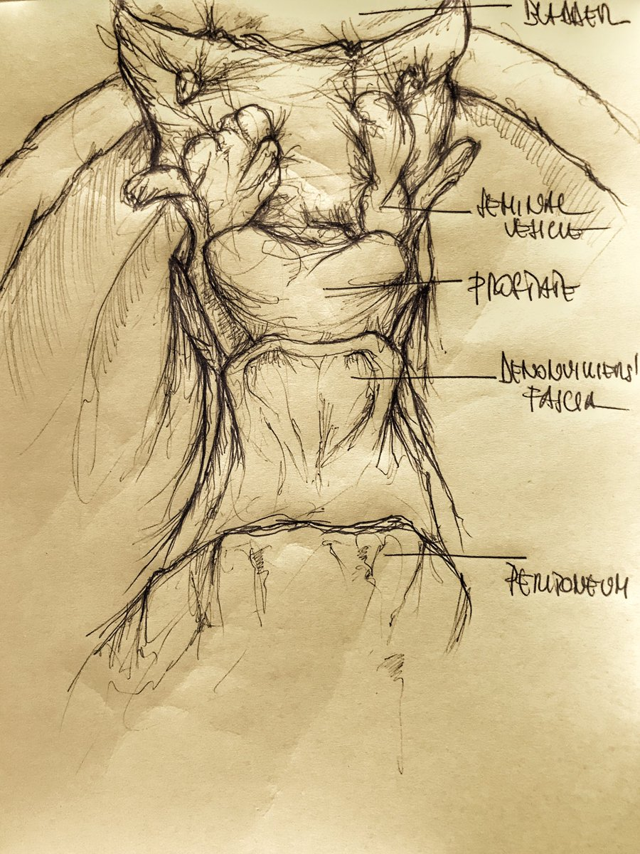 ormonoterapia prostata come si faster