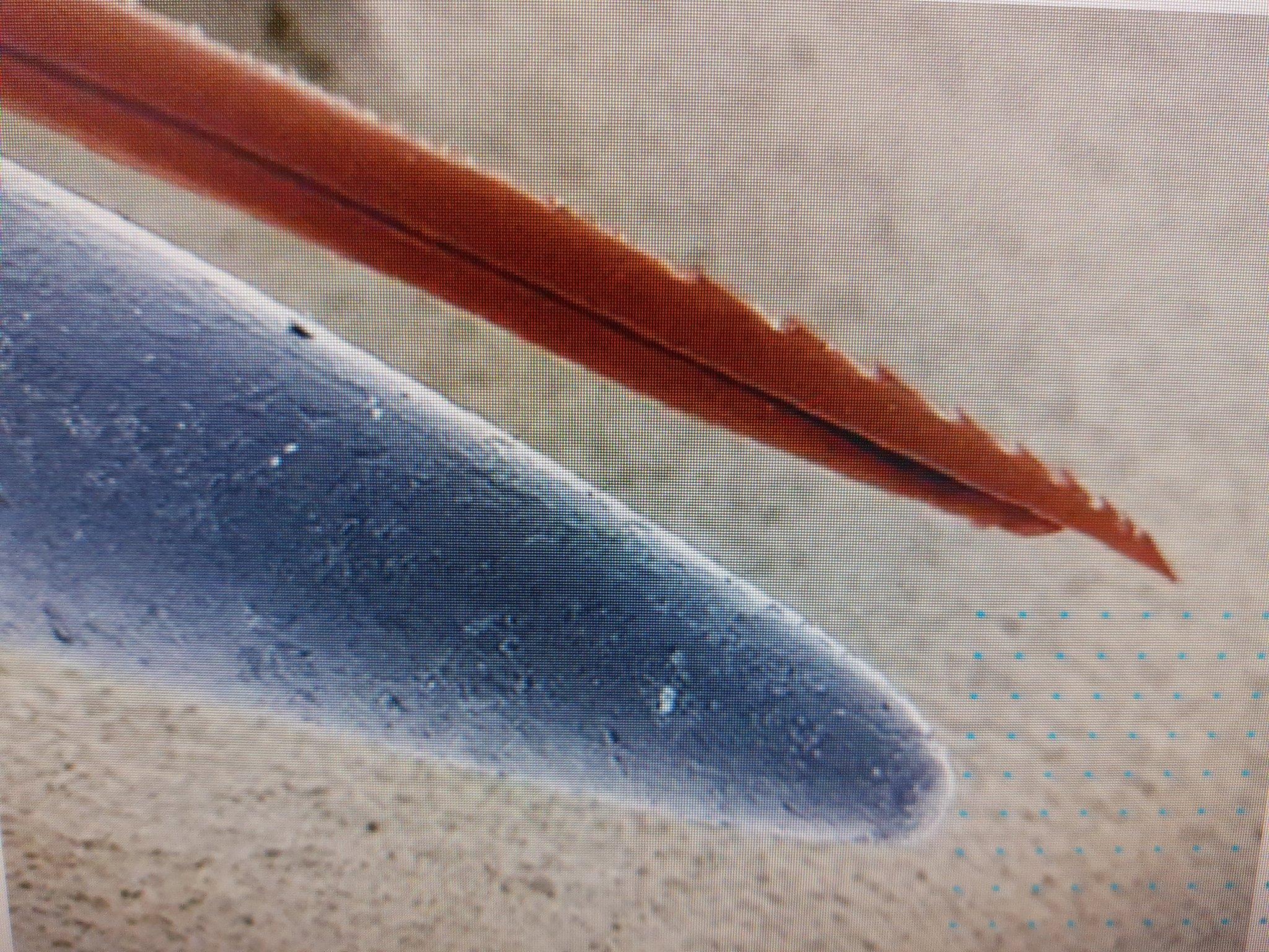 Ngòi ong chích và đầu cây kim, cái nào nhọn hơn?