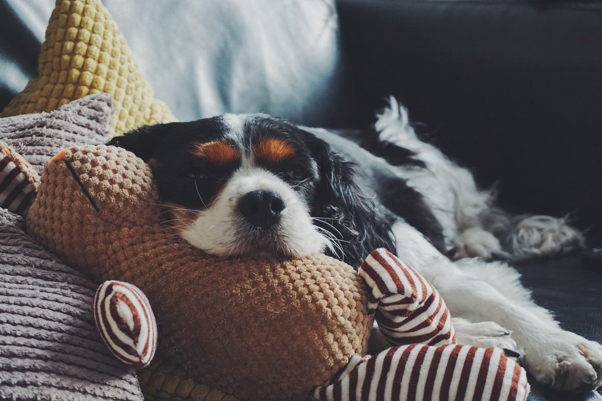 29 Broughton Grove, a dog friendly holiday cottage in North Yorkshire, has availability from the 29th December 2019 - 29th February 2020. Take advantage of these dates & book directly today!  🛏️ Sleeps 1-3   #Skipton #NorthYorkshire #DogFriendly #Holiday