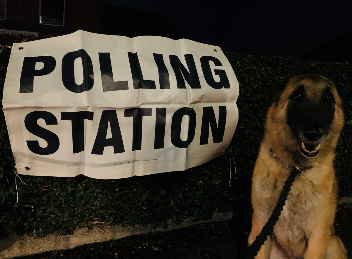 Shout out to Willow and Bailey and all the excellent #dogsatpollingstations