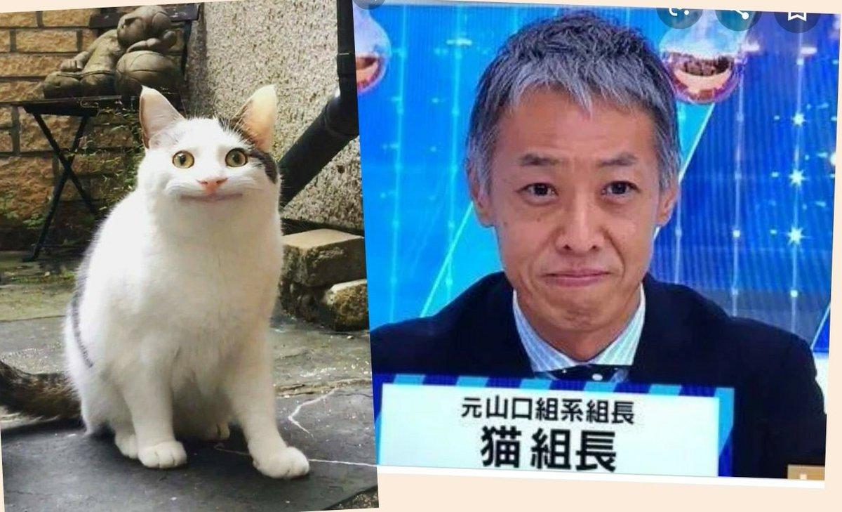 ツイッター猫組長