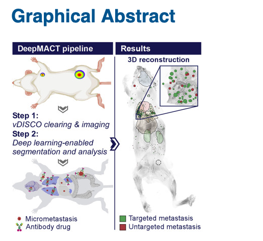 test Twitter Media - Deep Learning Reveals Cancer Metastasis and Therapeutic Antibody Targeting in the Entire Body #deeplearning https://t.co/g1OtsQy75n https://t.co/fwKLZTGqVU