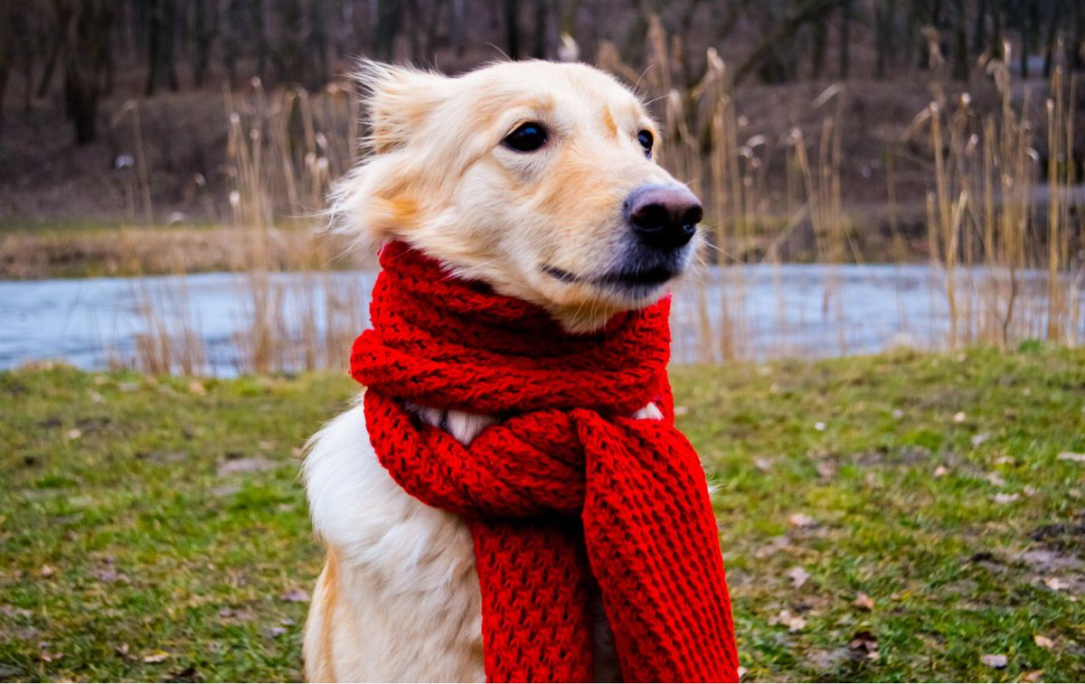 """""""Brrrrrr! This winter breeze sure is chilly""""  . . . #petantastic #petspace #doggydog #doggielife #pupdate #dogyear #pupster #dogclub #dognaps #dogdreams #puppyaday #petcute #dogteam #dogtime #poochie #dogtag #petstorepic.twitter.com/kHHRcMmcAs"""
