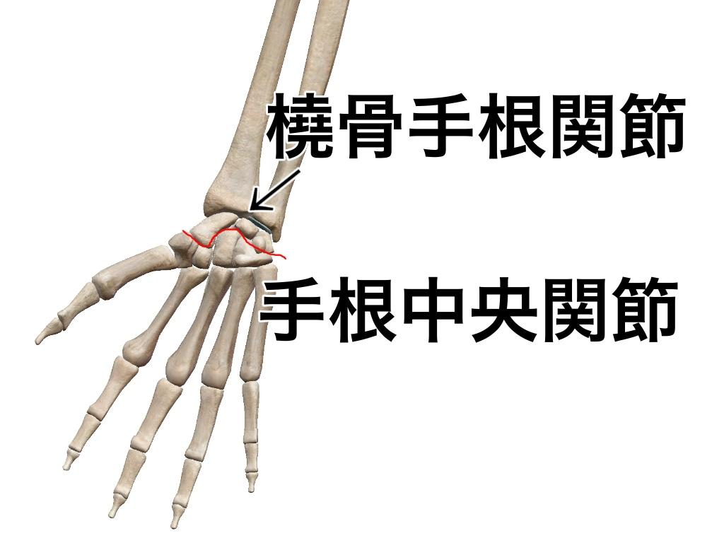 中 関節 手 根 手