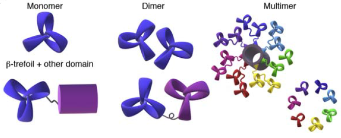 Trefoil and propellers are very elegant protein folds! Our review on structure and engineering of tandem-repeat lectins is out in COSB. Thanks to @NotovaSimona @FBonnardel_BI @GlycomicsExpasy and with @synBIOcarb and @Glyco_Alps. OA for 50 days at https://t.co/Xnf6iBHZ1l https://t.co/LMaMS4SJpr